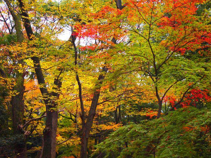 下鴨神社 秋の糺の森
