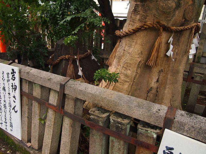 御神木のクロガネモチの木