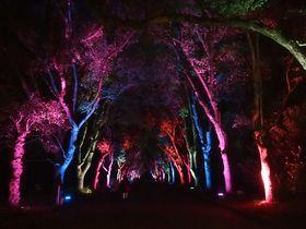 「京都府立植物園」冬の観覧温室夜間開室とイルミネーション