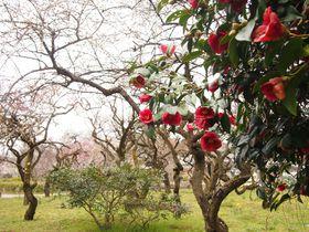 春まで待てない!?京都府立植物園で見られる早春の花々