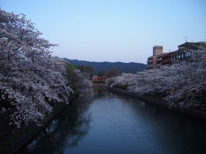 岡崎疏水・西部の光景