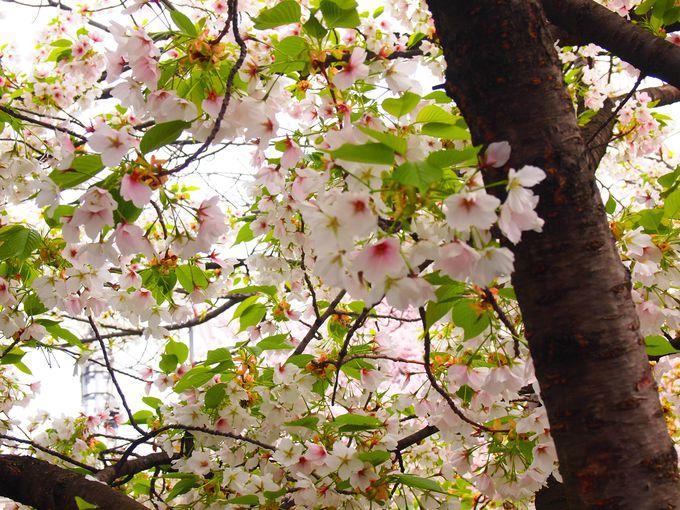 六孫王神社の多彩な花々