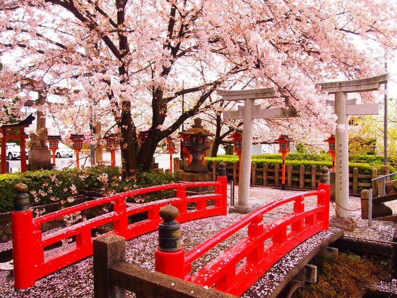 多彩な桜&桃も楽しめる春の京都「六孫王神社」