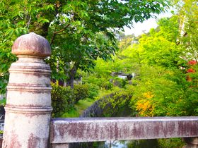 水辺の光景と初夏の花も美しい新緑の京都「哲学の道」