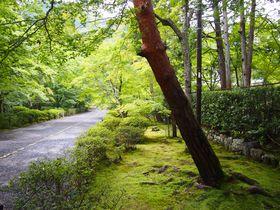 緑滴る参道が美しい!夏の京都嵐山「二尊院」