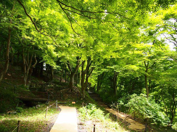周囲の緑も美しい!「叡山ケーブル」