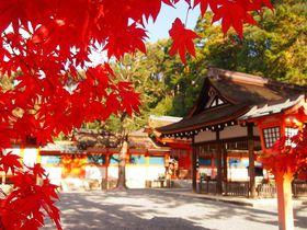 神々が集る場所!京都・吉田山「吉田神社」秋の紅葉