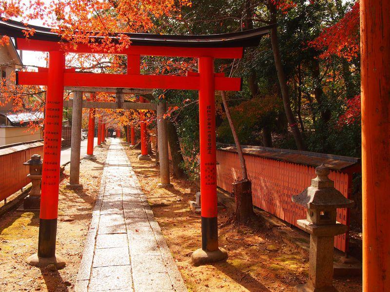 美しい紅葉と鳥居が続く!京都・吉田山「竹中稲荷社」