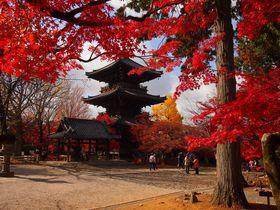 三重塔と紅葉が美しい!京都「真如堂」秋の必見ポイント