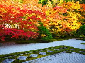 紅葉の庭園が鮮やか!京都・南禅寺「天授庵」心癒される秋の光景