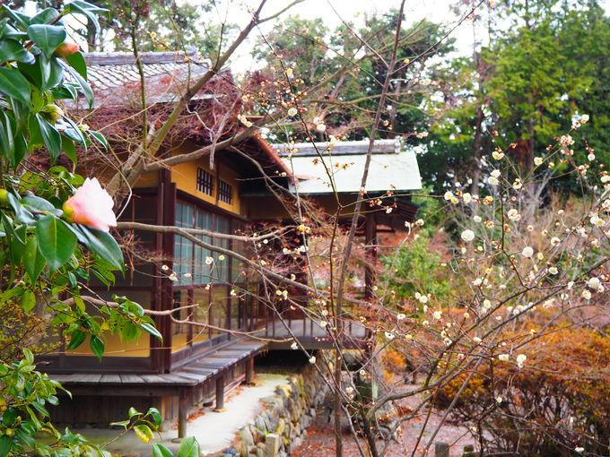 椿に水仙、竹や松の緑も美しい!神苑内の風景