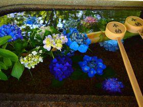 紫陽花や夏椿も美しい!青葉きらめく京都「真如堂」