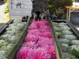 京都で大人気の「花手水」が見たい!おすすめスポット5選