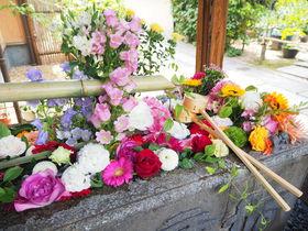 SNSで話題の京都・東福寺塔頭「勝林寺」は緑もお花も美しい!