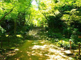 青もみじと竹の緑が美しすぎる!京都「浄住寺」特別拝観