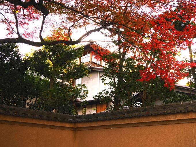 秋の旧三井家下鴨別邸