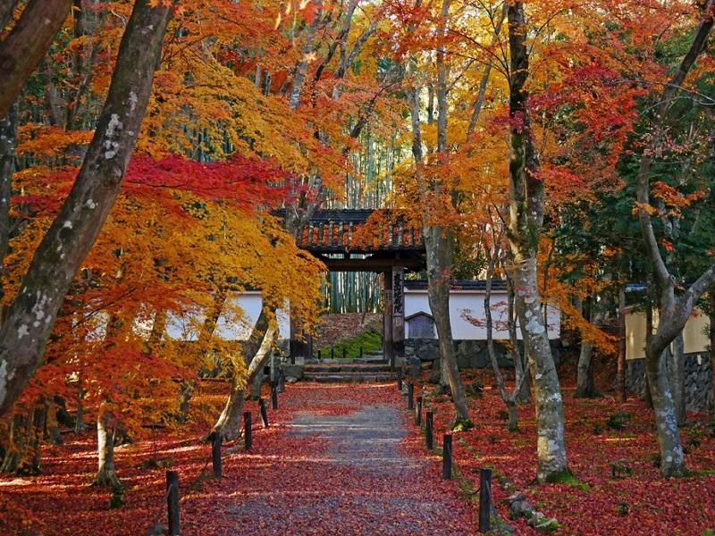 竹の寺の入り口「総門」