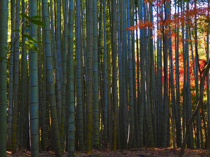 竹の寺「秋景色」