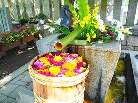 遊び心あふれる素敵な花手水!大阪府高槻市「野見神社」