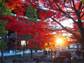 京都・秋の特別公開「金戒光明寺」紅葉の庭園と山門絶景!