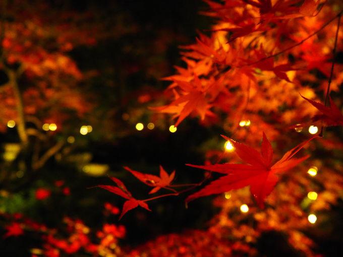 紅葉の庭園は必見!