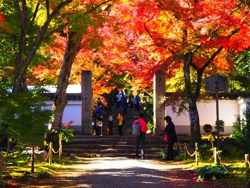 京都「浄住寺」秋の特別公開で参道紅葉に感動!本堂や方丈も必見