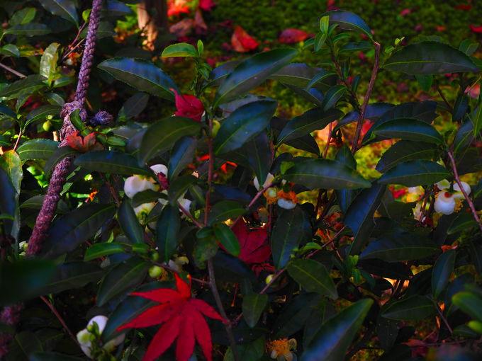 秋の境内を彩る植物たち