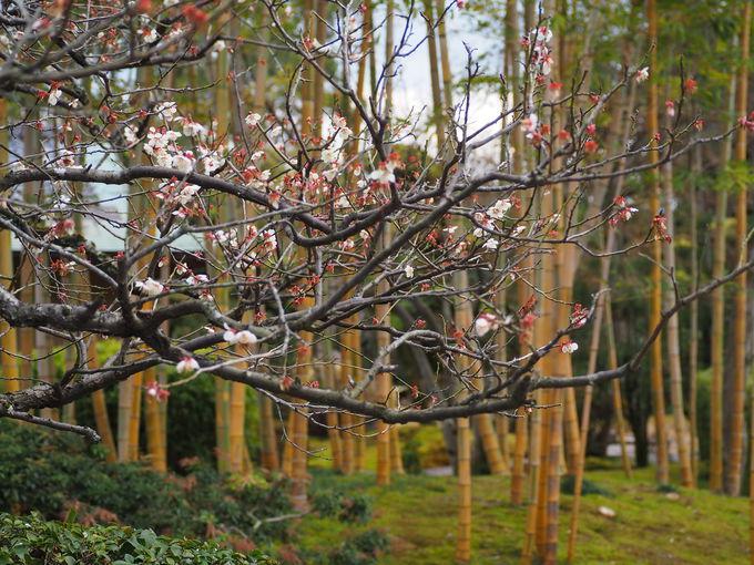 竹と花々のコラボレーション!