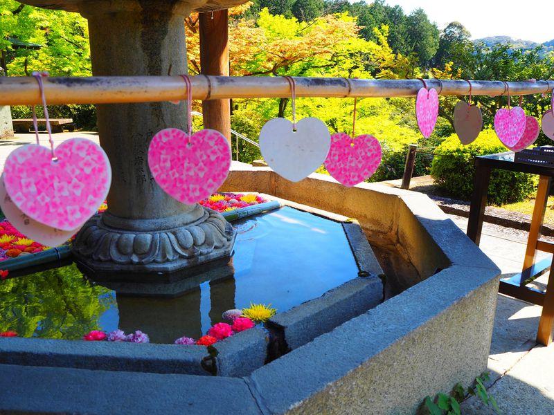 晩春の花々と緑に包まれる境内が美しい!京都・宇治「三室戸寺」
