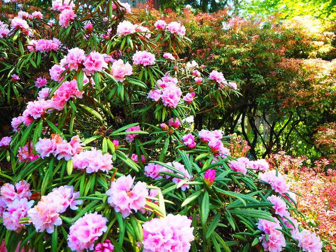 三室戸寺で見られる花々