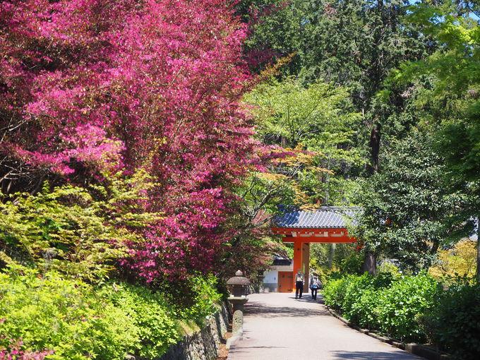 三室戸寺へと続く道