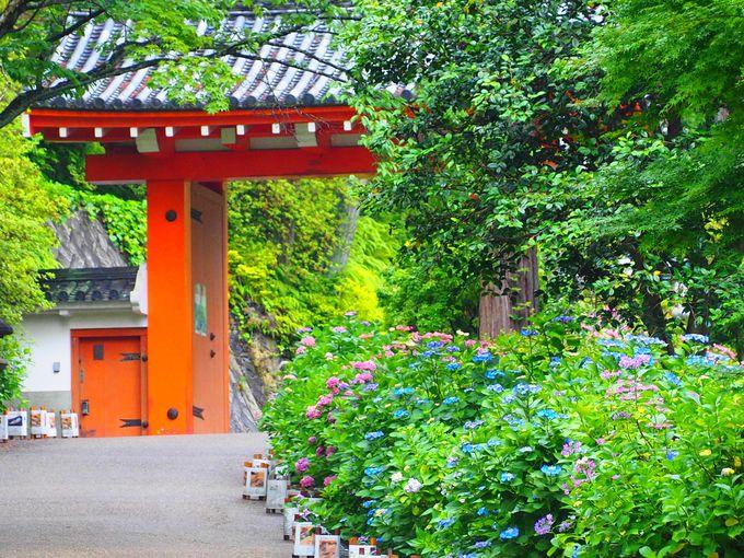 新緑も美しい!「三室戸寺」