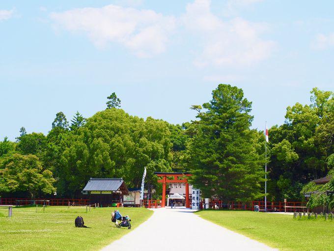 緑に映える鳥居も美しい!「上賀茂神社」