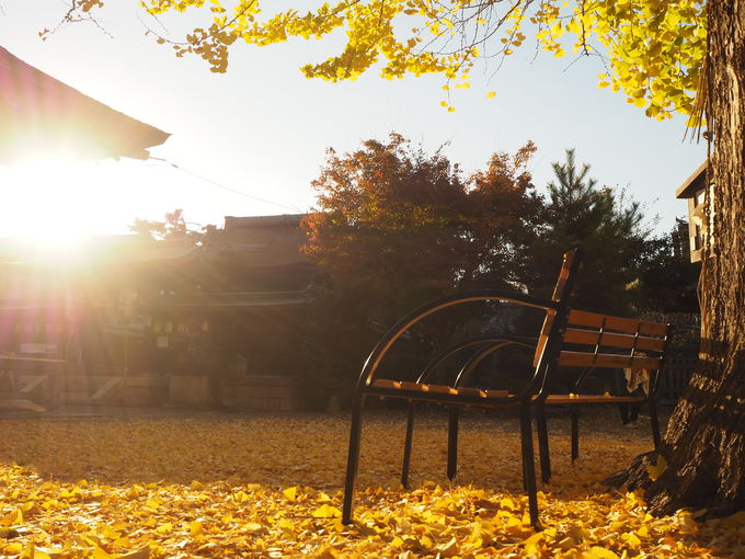 秋の夕刻は特におススメ!