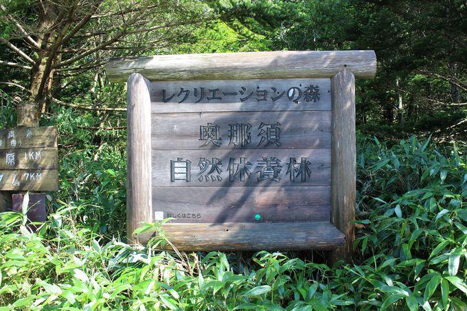 標高1200mにある「沼ッ原湿原」は那須観光の穴場