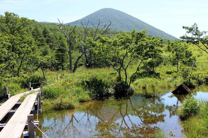 透き通った水と輝く緑がおりなす湿原は山の楽園!