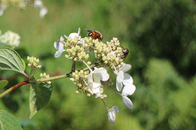 季節を問わずに色々な植物が迎えてくれる沼ッ原湿原