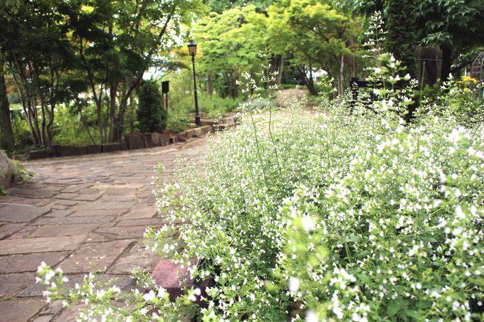 沢山のハーブがお出迎えしてくれる英国風ガーデンに感激!!