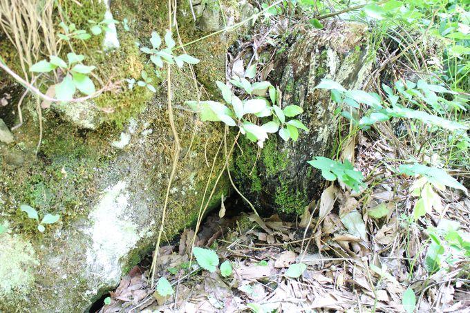 岩の隙間から冷たい空気が流れ出る風穴は天然のクーラー
