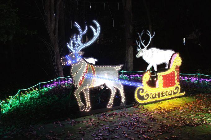サンタの代わりに光のトナカイに乗ってみませんか?