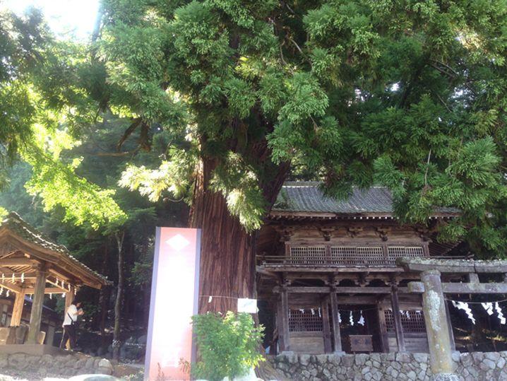 武田信玄が始めて行った事業が武田八幡神社の再建だった