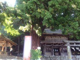 山梨韮崎のパワースポット!信玄が戦勝祈願した武田八幡神社
