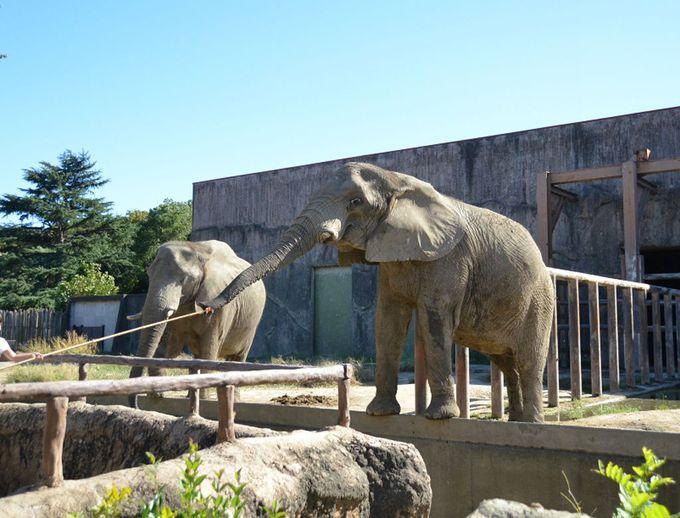 アフリカゾウの餌やりは、小さなお子様にもぴったり!