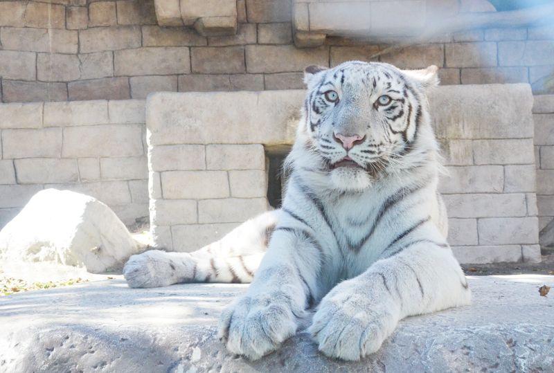 動物&遊園地の最強コンビ!東武動物公園(埼玉県)で丸一日楽しもう