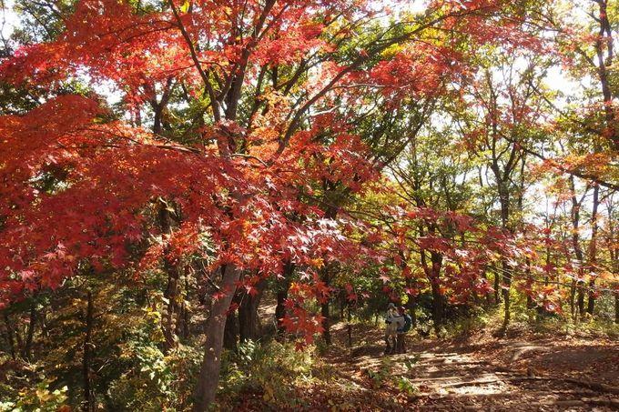 気持ちの良い樹林帯を歩きながら、景信山へ