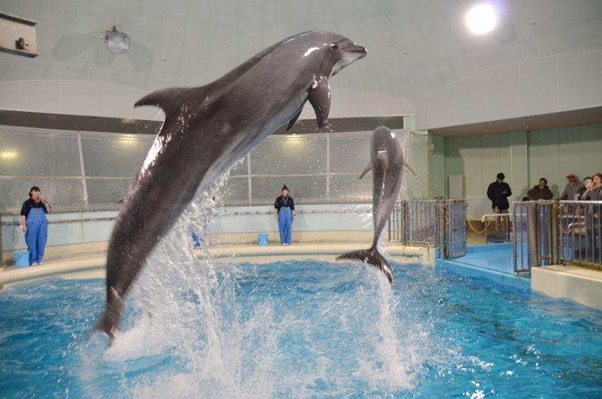 年中無休で営業!「浅虫水族館」でイルカに癒やされよう