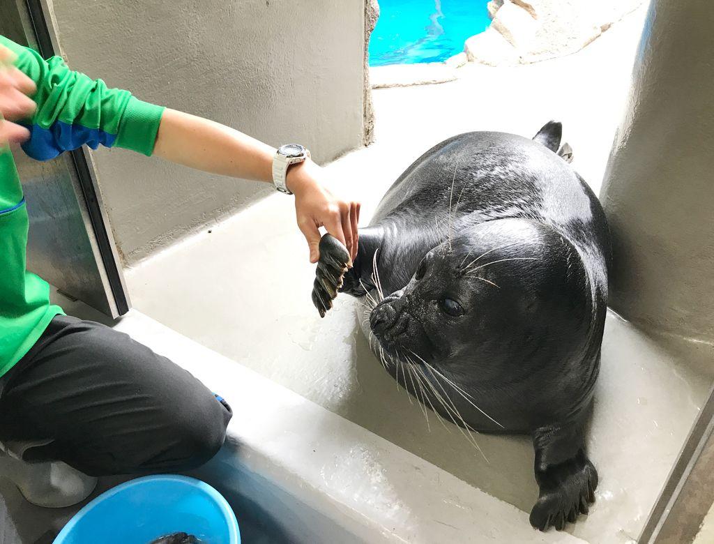 大注目の観光スポット「仙台うみの杜水族館」