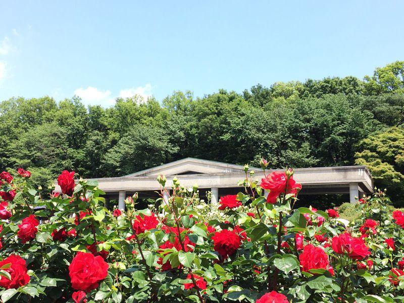 都内最大規模の「バラフェスタ」!神代植物公園で鮮やかな花々を楽しもう