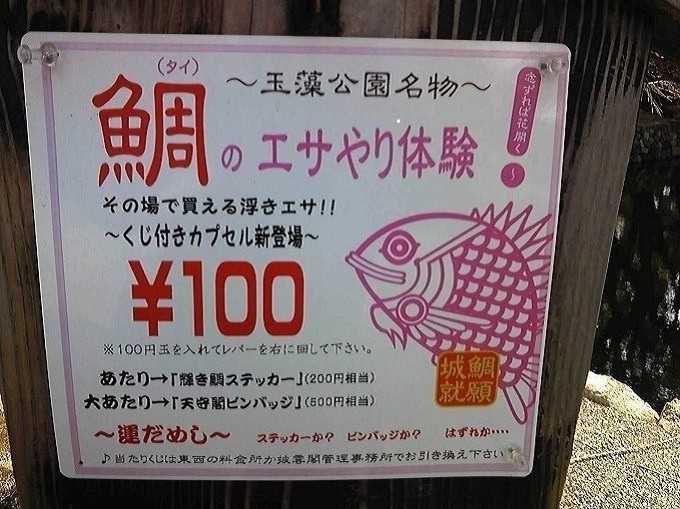 鯛のエサやり体験