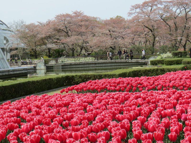 立地も景観も抜群の「京都府立植物園」